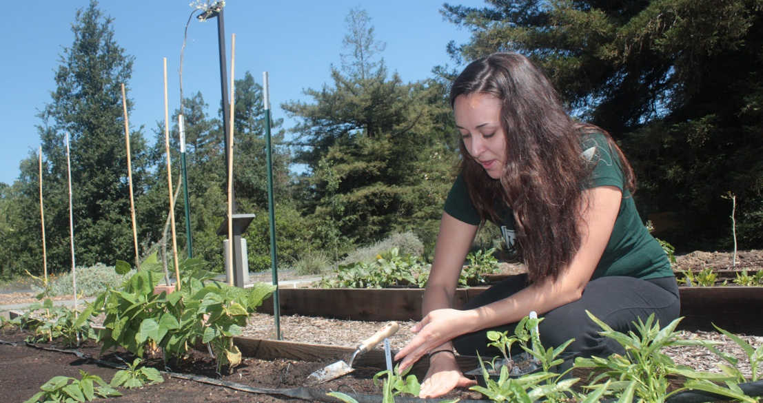 Pitch-and-Plant your ideas in campus gardening contest