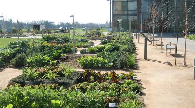 Edible Campus At UC Davis